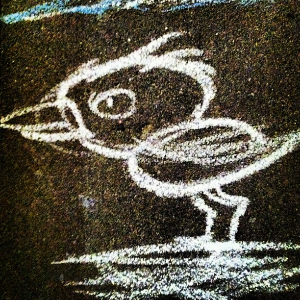 Instagram Photo of bird painted with chalk